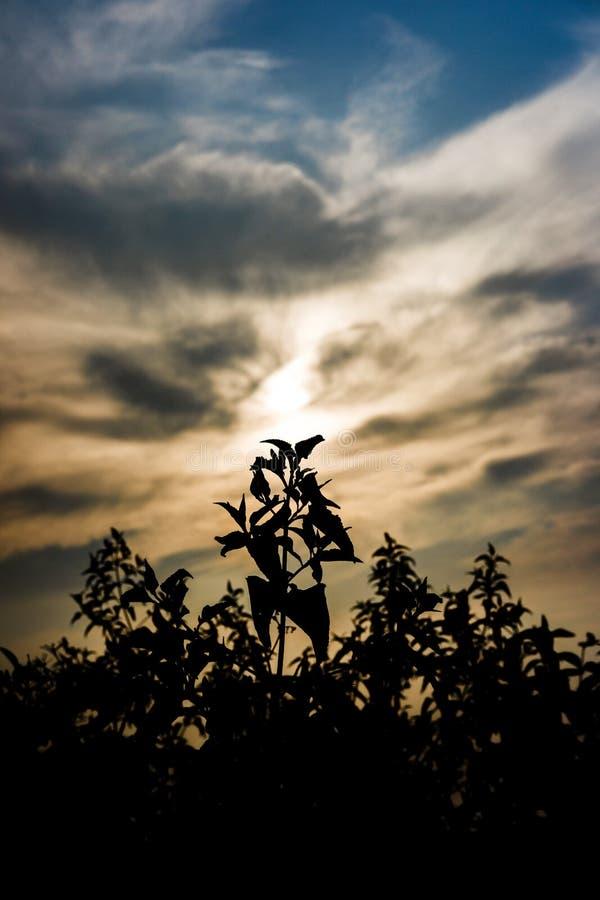 Chwalebnie kwiat z dramatycznym niebem zdjęcia royalty free