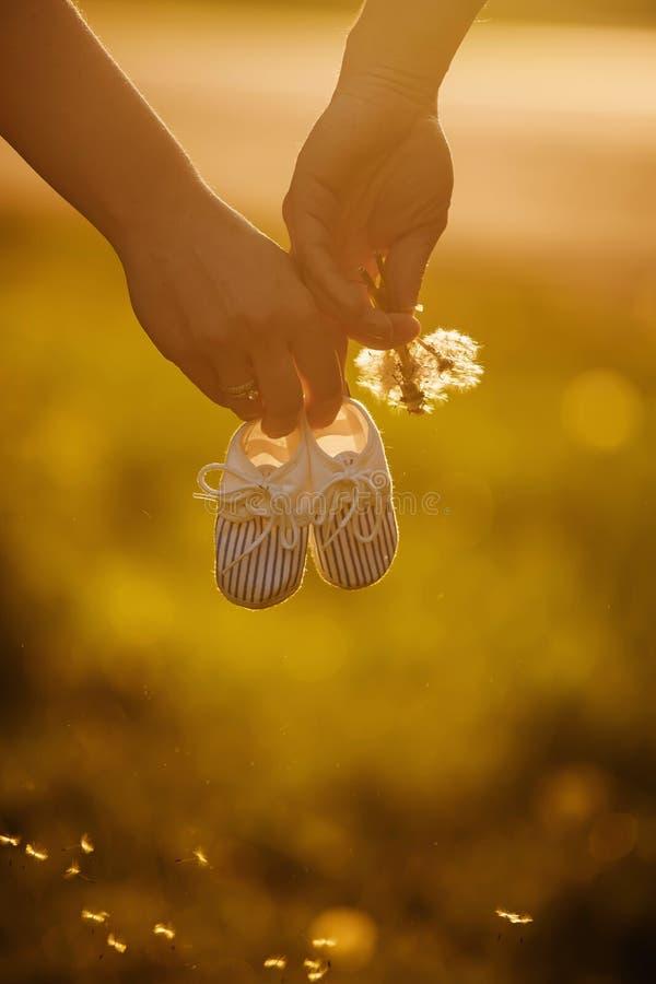 Chwyt ręki Przyszłościowa rodzina młoda rodzina czeka uzupełniającym matka trzyma dziecko buty, tata trzyma dandelion fotografia stock