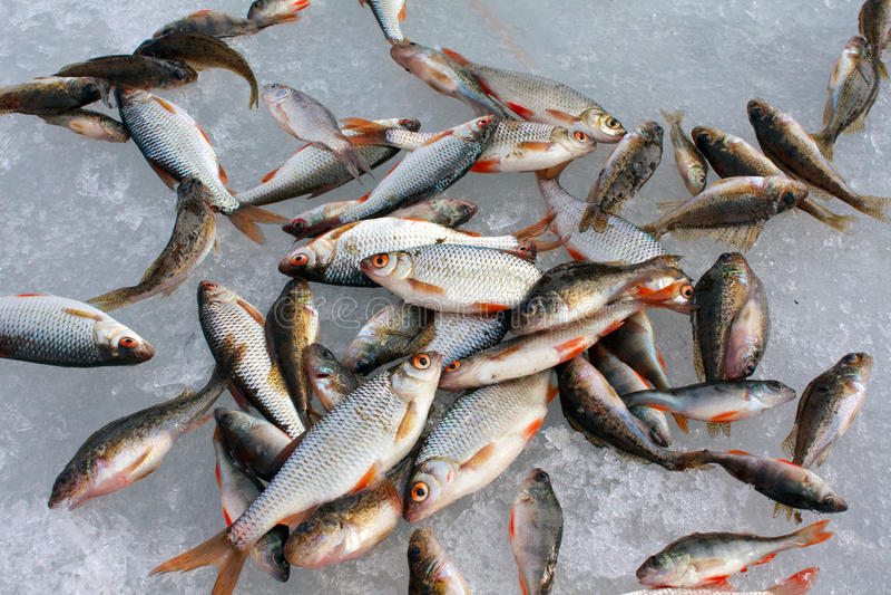 chwyt ryba fotografia stock