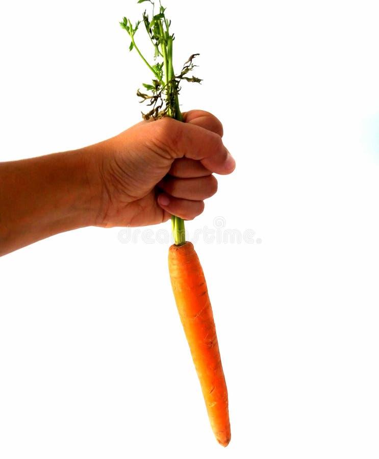 Chwyta marchewki zdjęcia stock