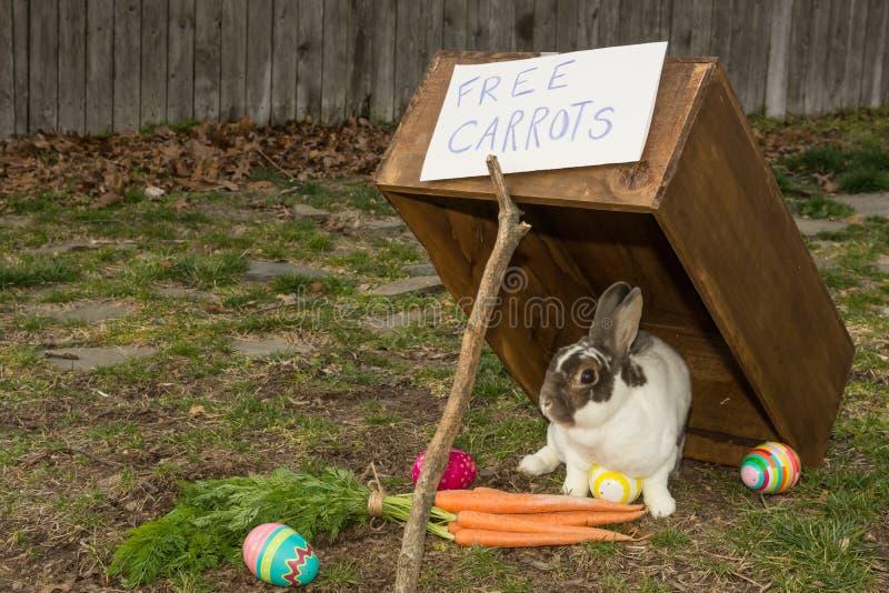 Chwytający Wielkanocny królik fotografia stock