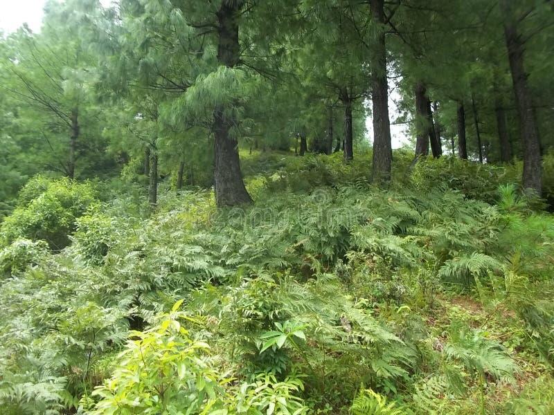 Chwytliwa naturalna scena Sudhnoti Kaszmir zdjęcia royalty free