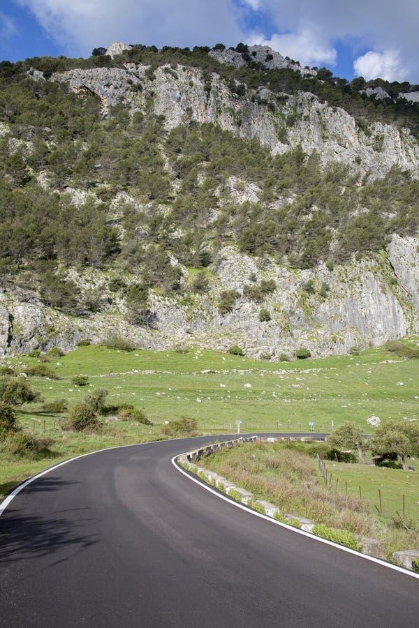 Chył na Otwartej drodze w Grazalema parku narodowym zdjęcia stock