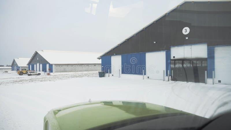 Ciężarówka w stajni z krowami footage Ciężarówka jedzie na gospodarstwie rolnym z stajniami w zimie i białym śniegu Uprawiać ziem zdjęcia royalty free