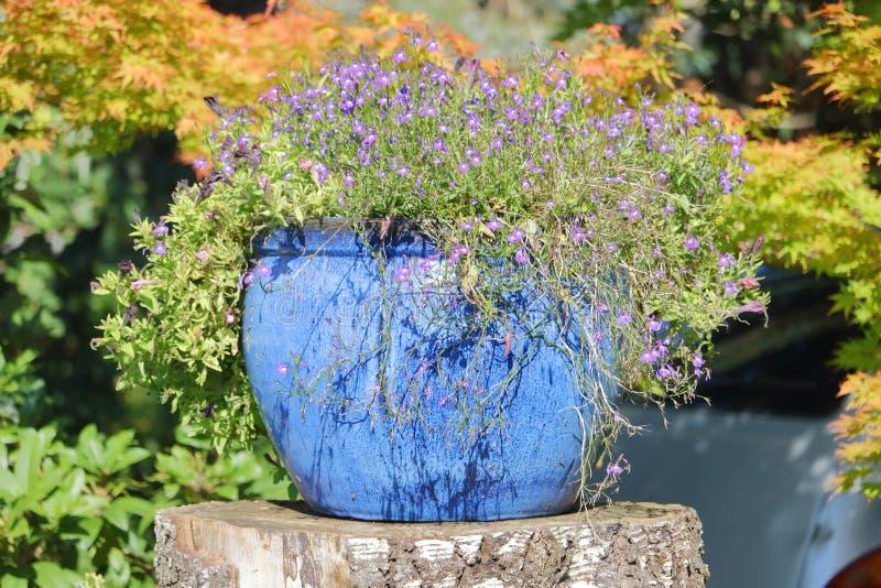 Ciérrese en el arreglo floral de la caída al aire libre imagen de archivo