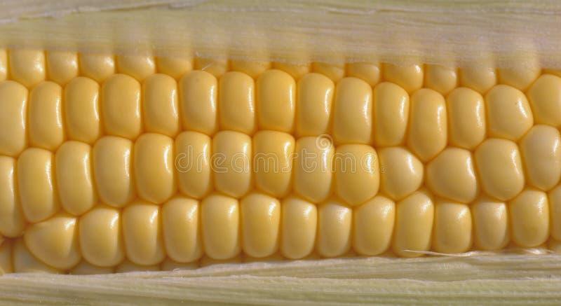Ciérrese en las semillas de un maíz dulce fresco fotos de archivo libres de regalías