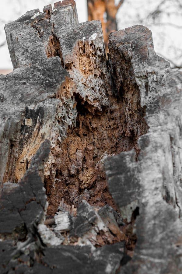 Ciérrese en un tronco de árbol cortado por la mitad con un interior poroso imagen de archivo libre de regalías