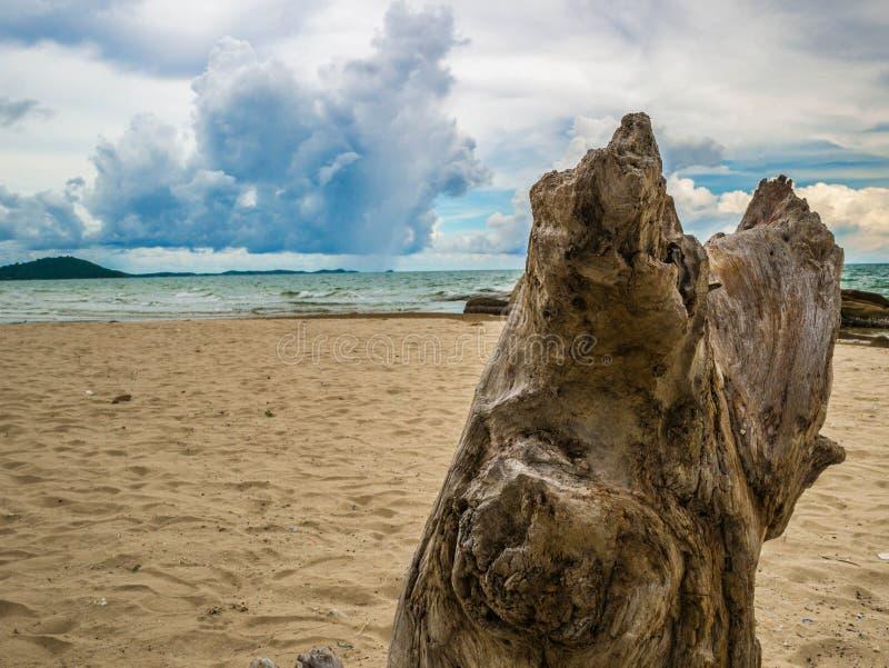 Ciérrese encima de árbol en la playa imagenes de archivo