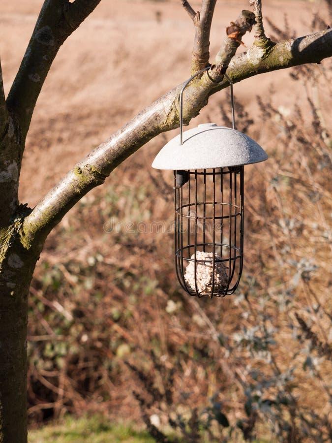 ciérrese encima de alimentador del pájaro de la ejecución en árbol con una bola gorda dentro foto de archivo