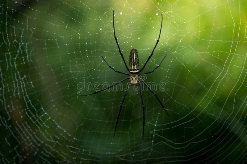 Ciérrese encima de araña en naturaleza imagen de archivo libre de regalías