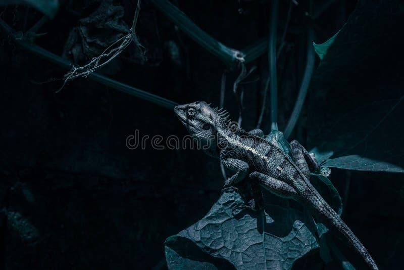 Ciérrese encima de camaleón tailandés en fondo verde natural foto de archivo libre de regalías