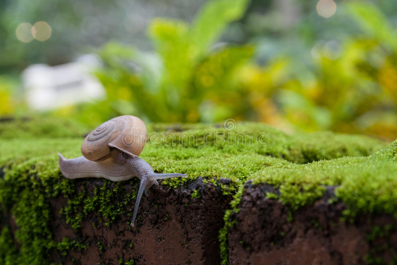 Ciérrese encima de caracol en la estera del musgo fotografía de archivo libre de regalías