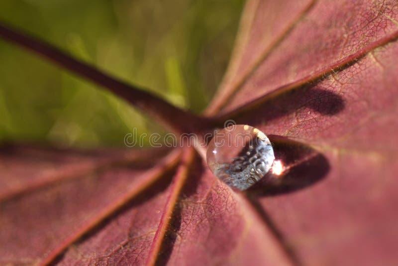Ciérrese encima de descenso macro estupendo del agua del tiro en la hoja y la flor foto de archivo libre de regalías