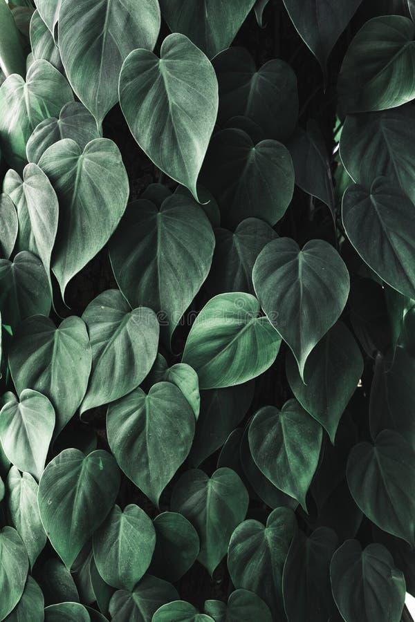 Ciérrese encima de follaje verde oscuro tropical de la hoja Naturaleza abstracta Backgr imagen de archivo libre de regalías