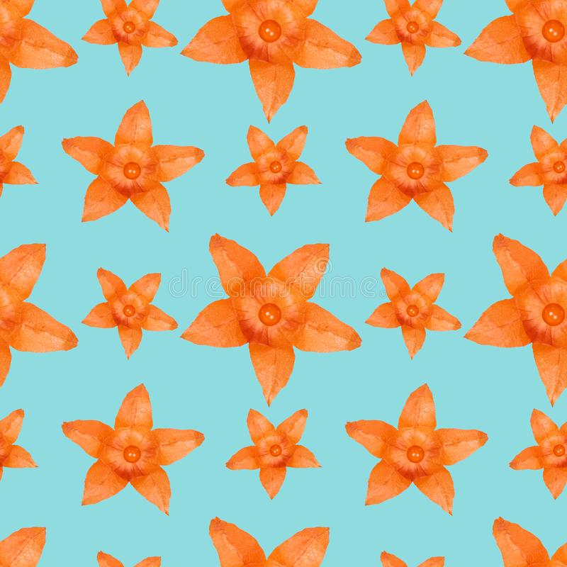 Ciérrese encima de fondo inconsútil del modelo de la flor anaranjada del physalis libre illustration