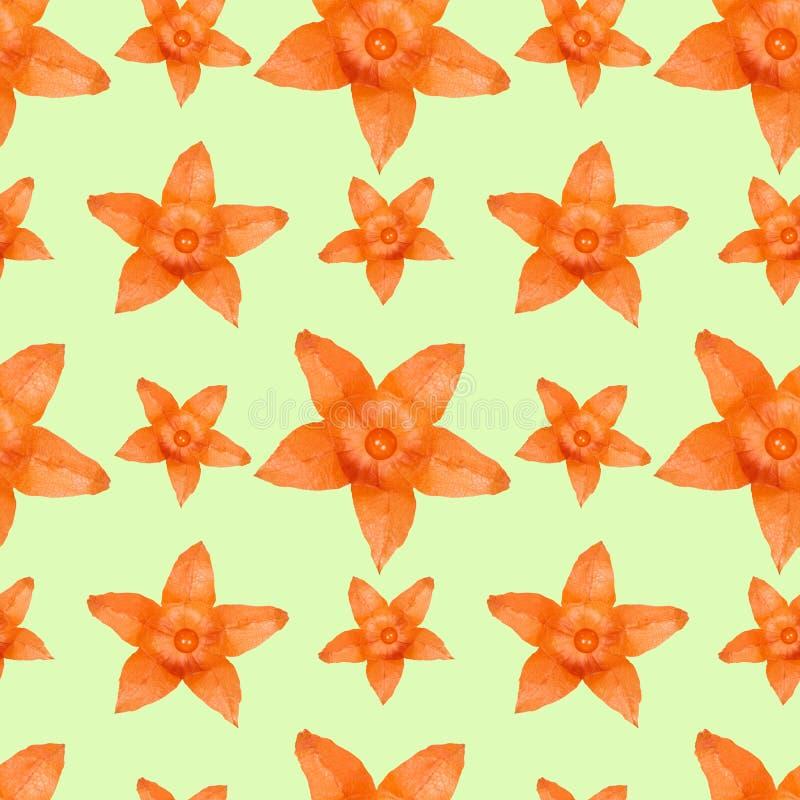 Ciérrese encima de fondo inconsútil del modelo de la flor anaranjada del physalis ilustración del vector