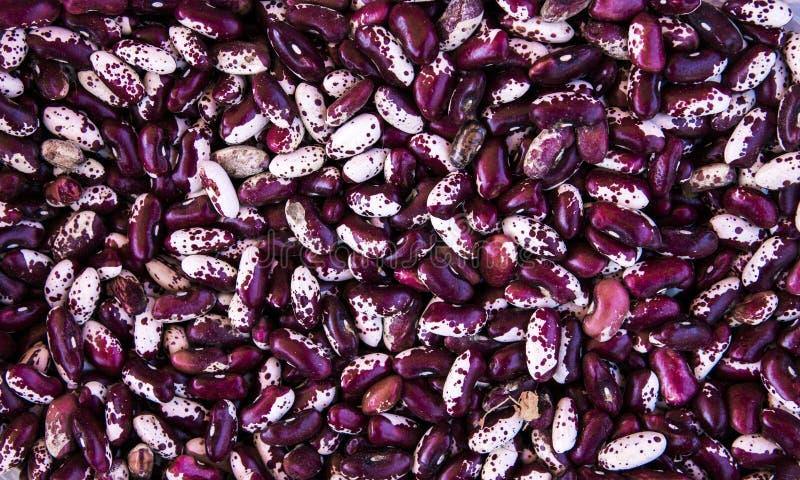 Ciérrese encima de fondo de las habas violetas y blancas y como textura Ricos vegetarianos sanos del alimento dietético en microe imagenes de archivo