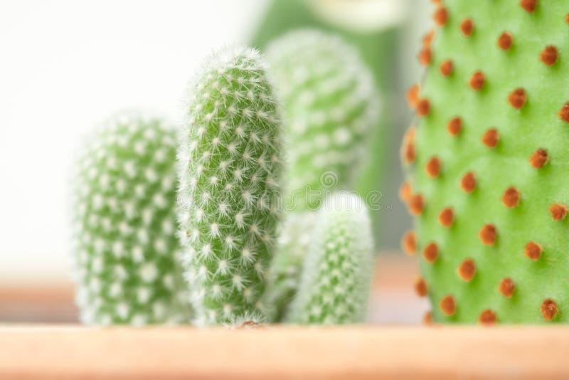 Ciérrese encima de fondo natural del cactus fotografía de archivo