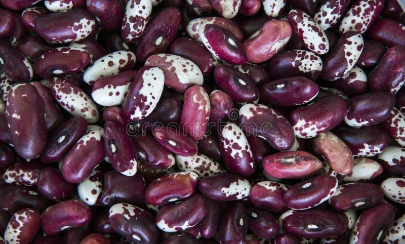 Ciérrese encima de fondo rojo de habas blancas y como textura Ricos vegetarianos sanos del alimento dietético en microelementos S foto de archivo libre de regalías
