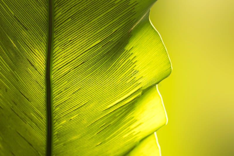 Ciérrese encima de fondo verde del extracto de la naturaleza de la hoja del helecho de la jerarquía del ` s del pájaro imagen de archivo