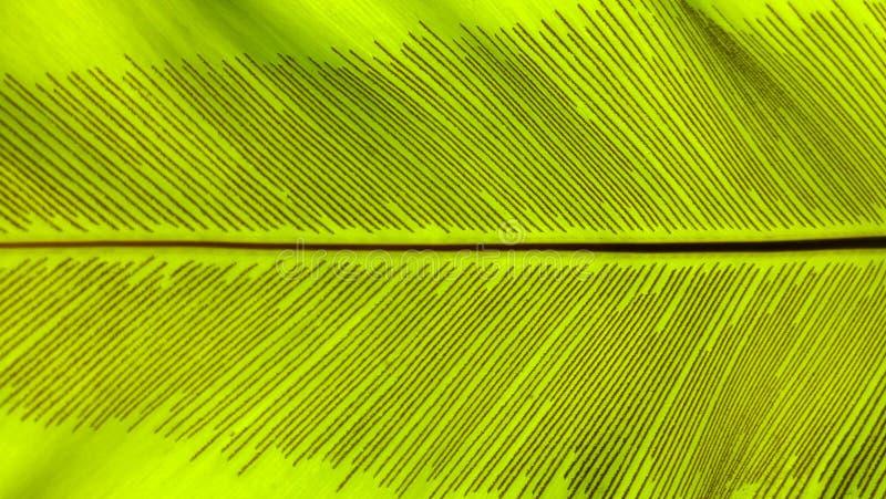 Ciérrese encima de fondo verde del extracto de la naturaleza de la hoja del helecho imagen de archivo libre de regalías
