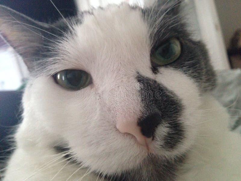 Ciérrese encima de gato imagen de archivo