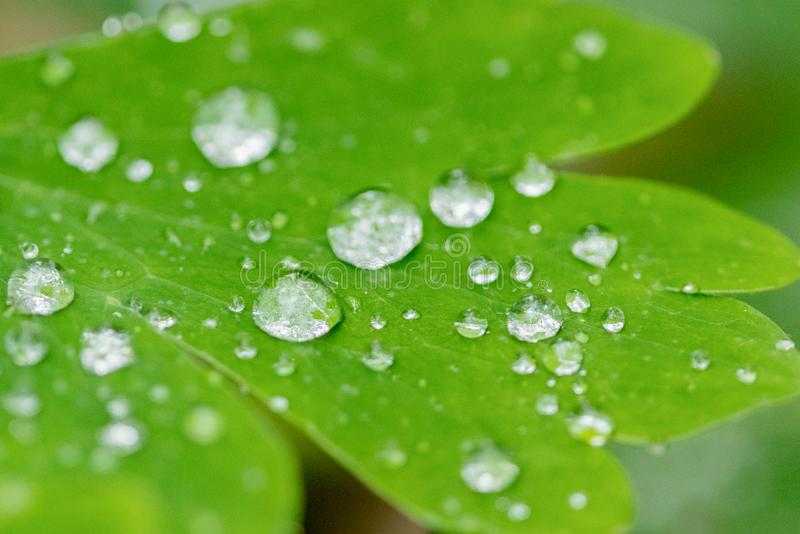 Ciérrese encima de gotitas de agua en una hoja verde con el fondo borroso en un jardín foto de archivo