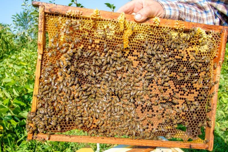 Ciérrese encima de granja de la abeja en caja fotografía de archivo libre de regalías