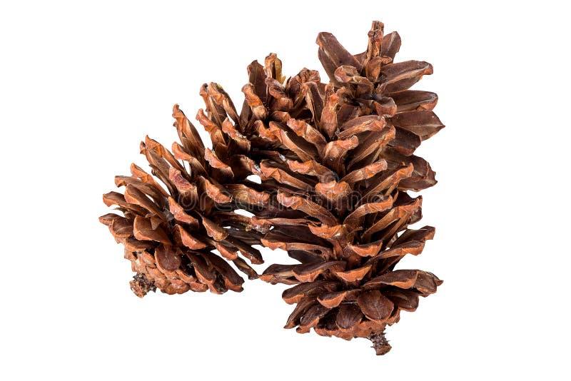 Ciérrese encima de grupo del cono del pino en blanco aislado fotos de archivo
