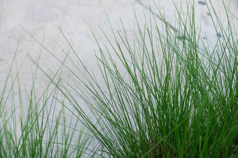 Ciérrese encima de hierba foto de archivo libre de regalías