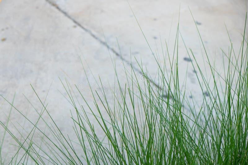 Ciérrese encima de hierba imagenes de archivo
