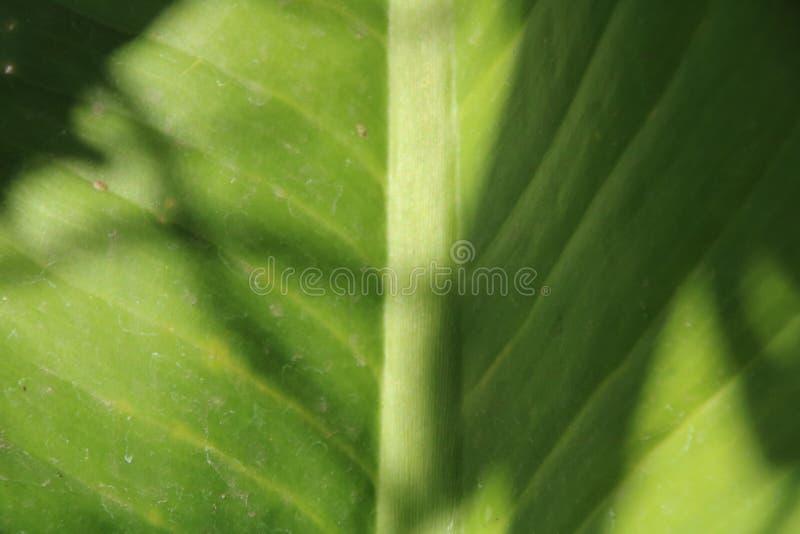Ciérrese encima de imagen de la hoja verde foto de archivo