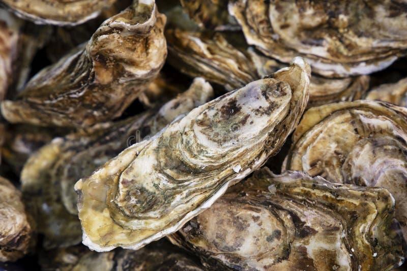 Ciérrese encima de la captura fresca de ostras en mercado imágenes de archivo libres de regalías