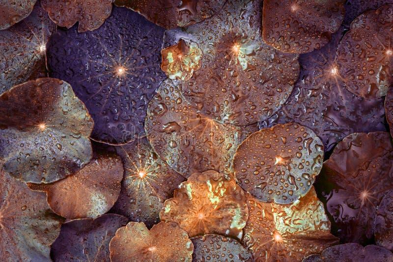 Ciérrese encima de la decoración de la hoja del círculo con gota de lluvia del agua como imagen de archivo libre de regalías