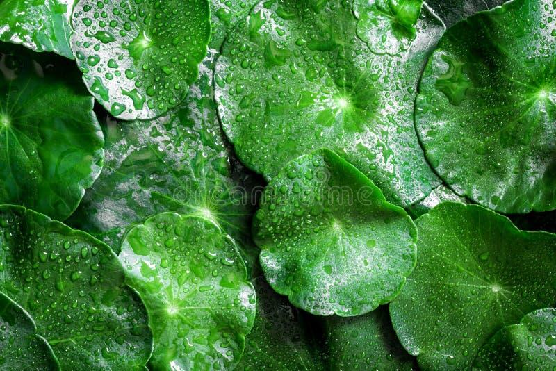 Ciérrese encima de la decoración de la hoja del verde del círculo con gota de lluvia del agua como ab fotografía de archivo