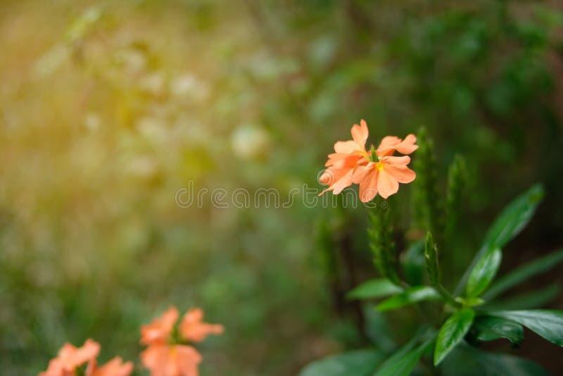 Ciérrese encima de la flor hermosa y el haz del sol, copia el espacio imágenes de archivo libres de regalías