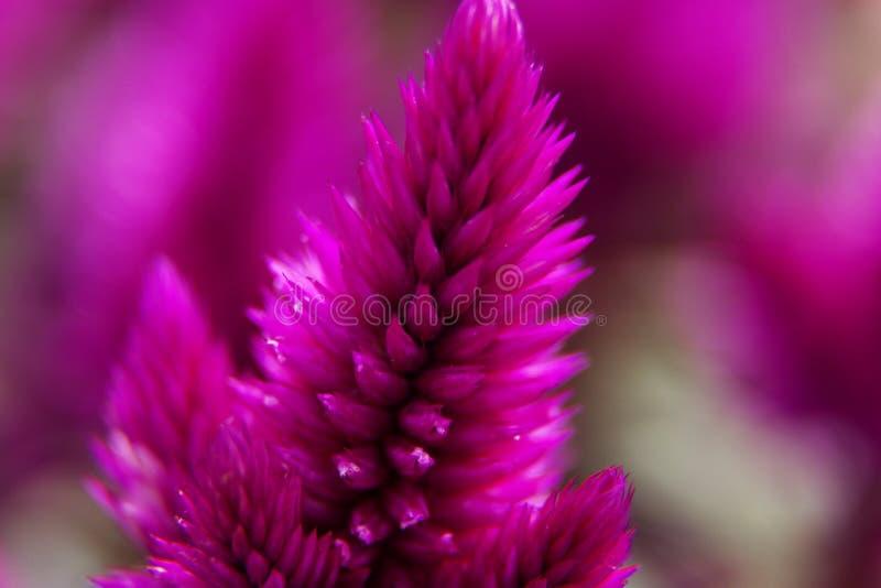 Ciérrese encima de la flor rosada con los puntos fotos de archivo libres de regalías