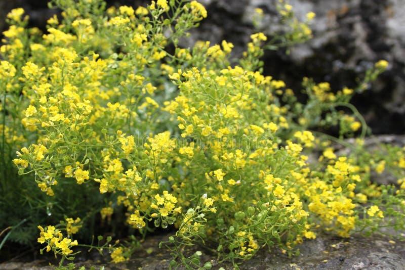 Ciérrese encima de la imagen de flores amarillas imágenes de archivo libres de regalías