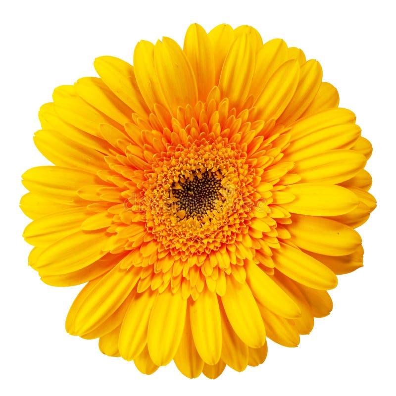 Ciérrese encima de la opinión la margarita amarilla fotos de archivo libres de regalías