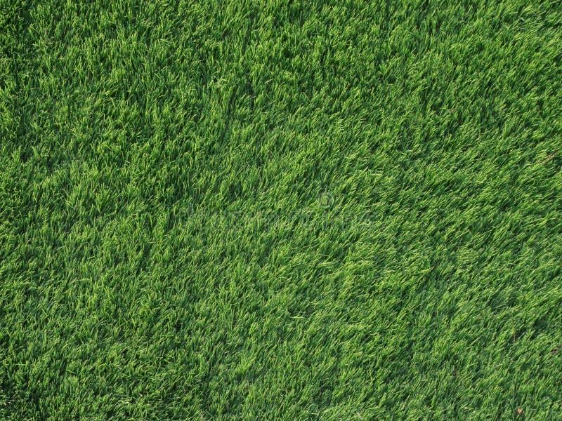 Ciérrese encima de la opinión superior la hierba verde del detalle de la textura para el fondo, concepto del deporte de la natura foto de archivo libre de regalías