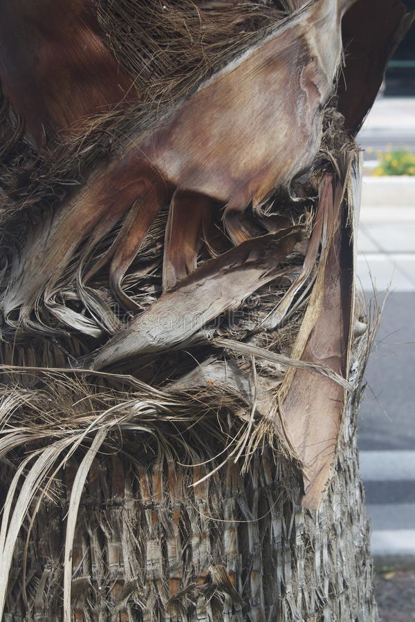 Ciérrese encima de la palmera en el camino foto de archivo libre de regalías