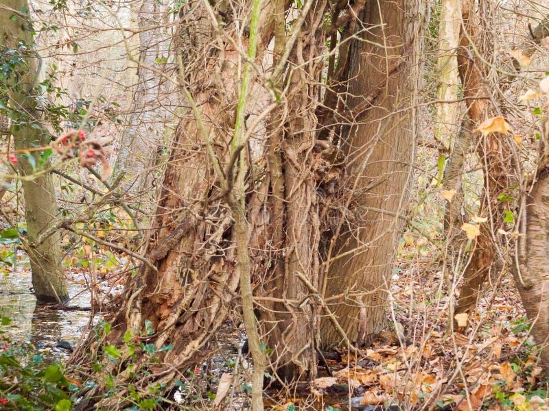 Ciérrese encima de la vista de las ramas desnudas marrones que crecen junto a árbol desnudo fotos de archivo