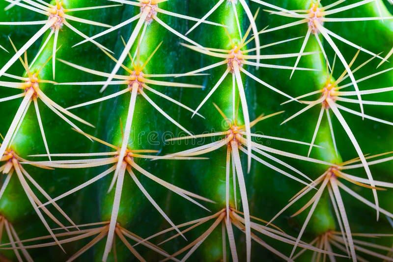 Ciérrese encima de la vista lateral del cactus para el fondo foto de archivo libre de regalías