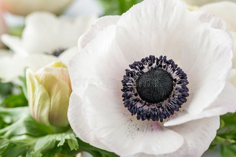 Ciérrese encima de las anémonas del rosa y blancas en el florero de cristal Color en colores pastel del manojo el concepto de un  imágenes de archivo libres de regalías