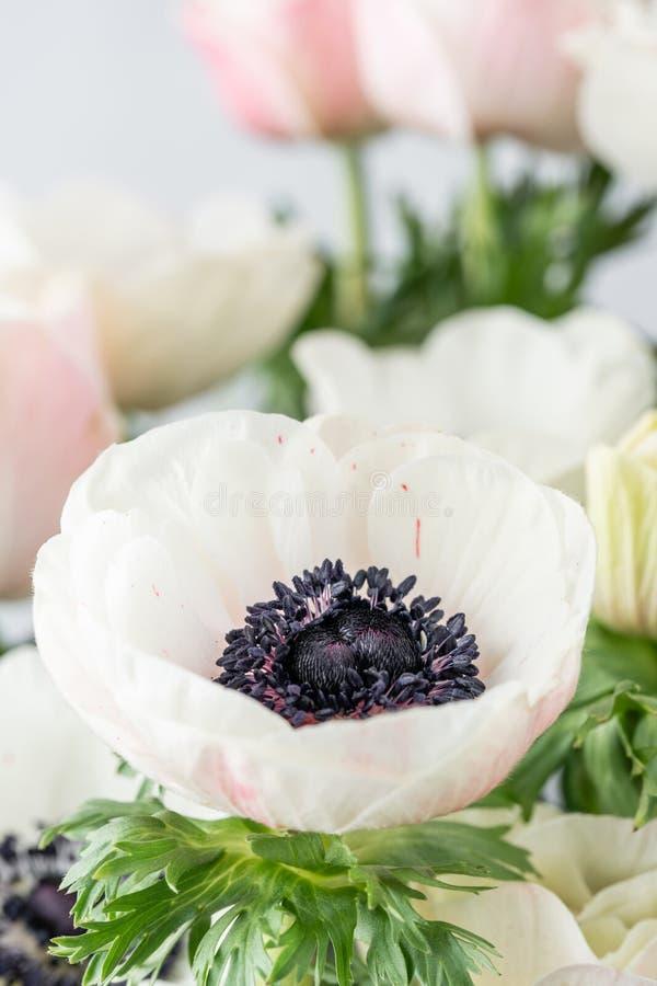 Ciérrese encima de las anémonas del rosa y blancas en el florero de cristal Color en colores pastel del manojo el concepto de un  fotografía de archivo libre de regalías