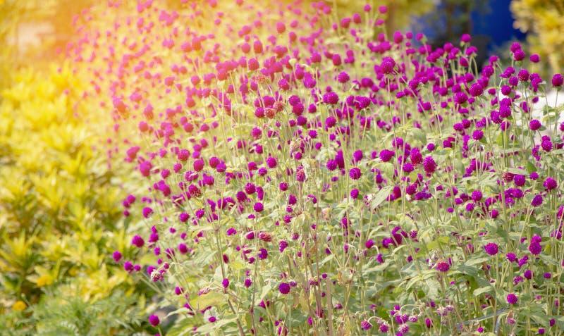 Ciérrese encima de las flores hermosas imagen de archivo