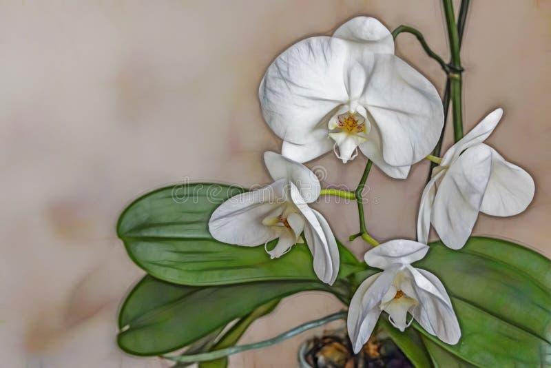 Ciérrese encima de las flores de las orquídeas en naturaleza libre illustration