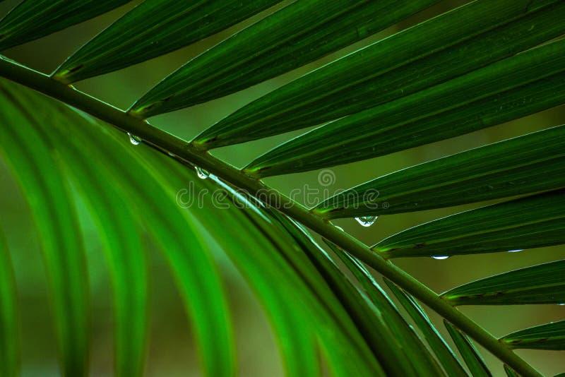 Ciérrese encima de las hojas de palmeras fotografía de archivo
