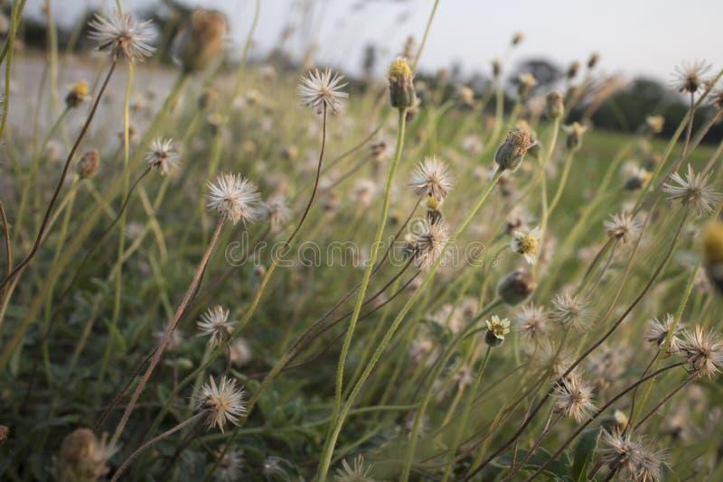 Ciérrese encima de las imágenes de flores salvajes fotos de archivo libres de regalías