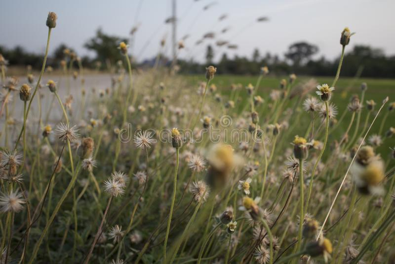 Ciérrese encima de las imágenes de flores salvajes fotos de archivo